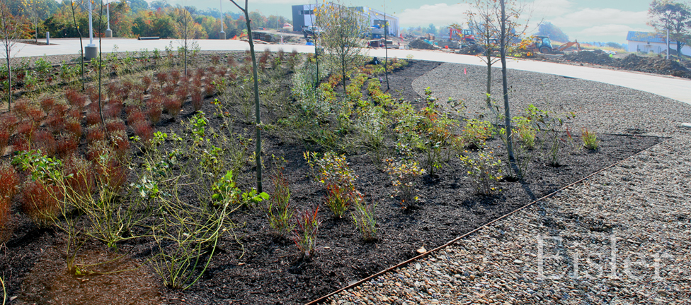 Rain garden in the parking and drop off area at Eden Hall.