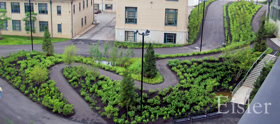 New plantings in rain garden and walkways between buildings at CMU Gates Hillman Complex