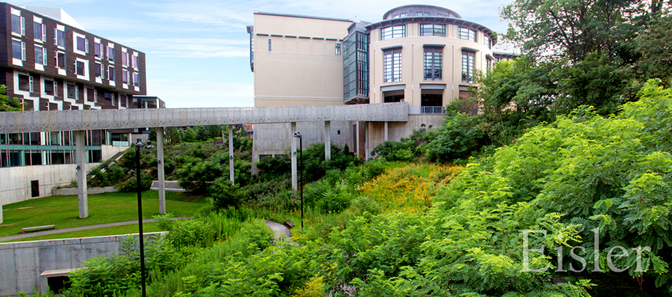 Native plantings on hill at Gates Science Center.