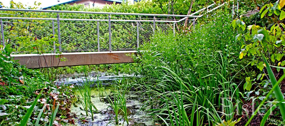 CMU Gates Hillman Complex bog garden